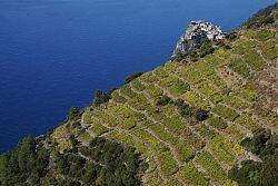 photo cinque terre vineyards