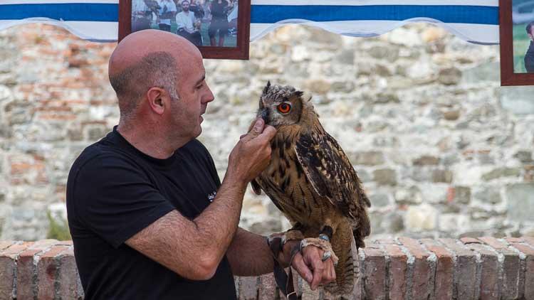 owl trainer